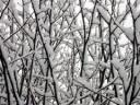 winter_snow_branches_281928_m.jpeg
