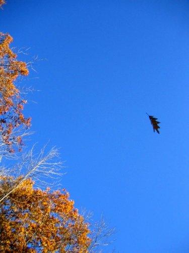 fall_falling_leaf_419645_l