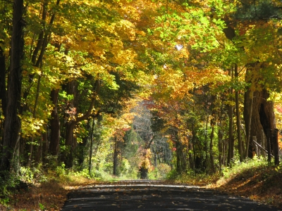 autumn_country_road_2