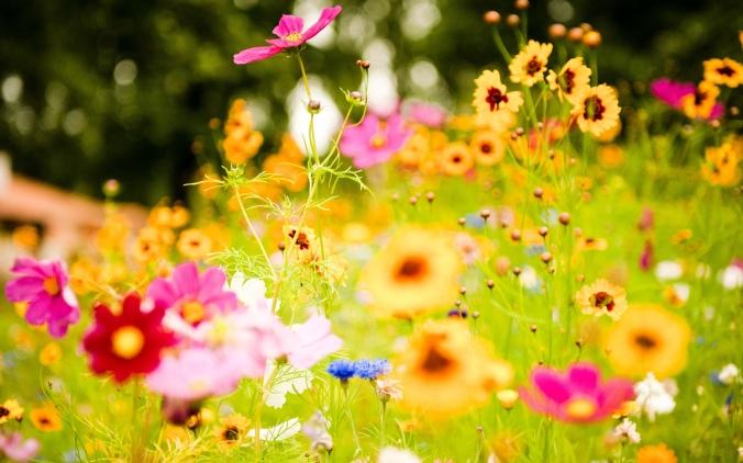 vivid_flowers-wide
