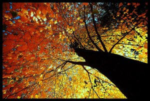 fall-trees-1